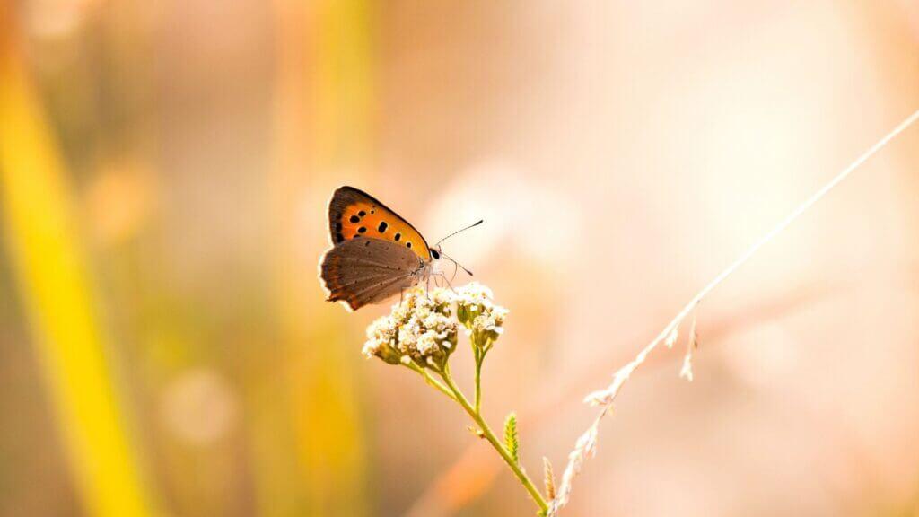 Kleine voetafdruk van de vlinder